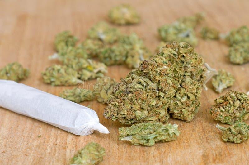 Torra marijuanaknoppar royaltyfri fotografi