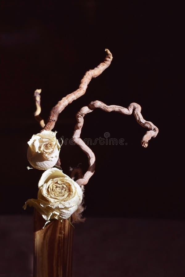 Download Torra ro arkivfoto. Bild av grupp, blomma, dött, natur - 76702646