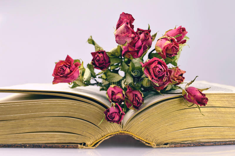 Torra rosor och en gammal bok royaltyfri foto