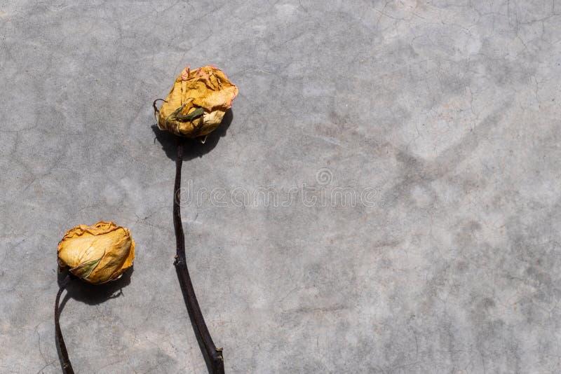 Torra rosor på grungecementbakgrund royaltyfri bild