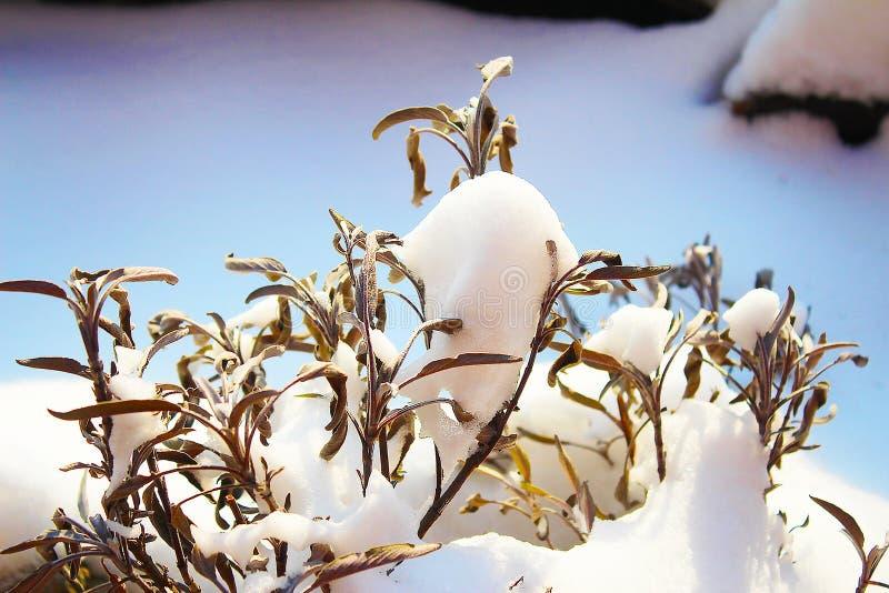 Torra sidor av vis man i solig snö arkivbild