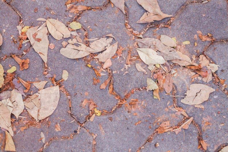 Torra sidor på trottoaren i höst parkerar arkivfoto