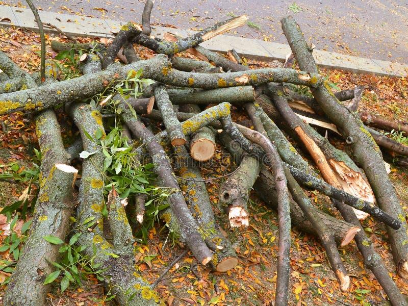 Torra stammar och trädfilialsnittet ner och lögnen på sidan av vägen i parkerar arkivfoton