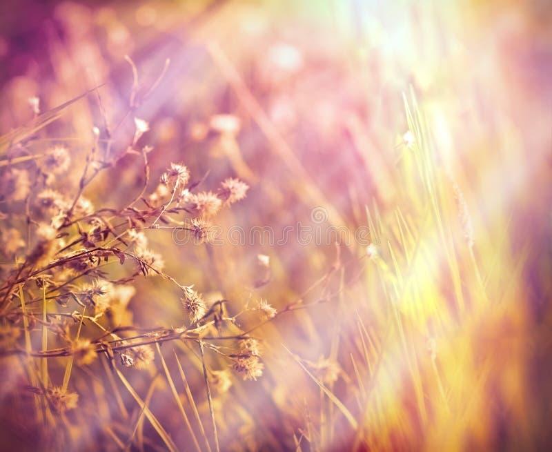 Torra torkade blommor i äng arkivfoton