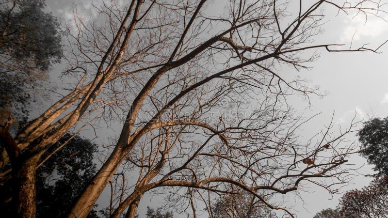 Torra träd, varm luft i sommar arkivbild