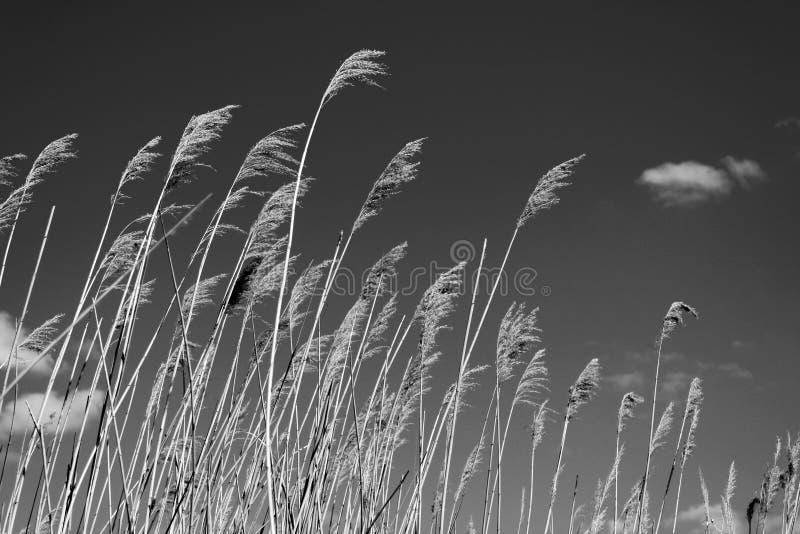 Torra vasser mot himlen med moln och solen, svartvitt foto royaltyfri bild