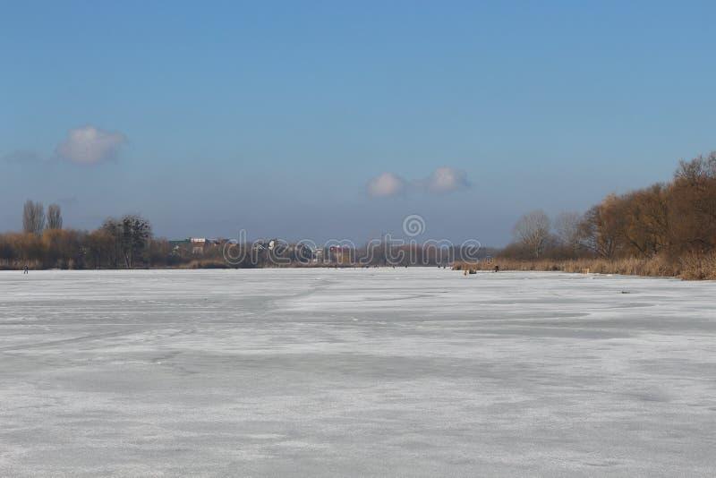 Torra vasser och träd är på kusten av en sjö som täckas med is royaltyfri fotografi