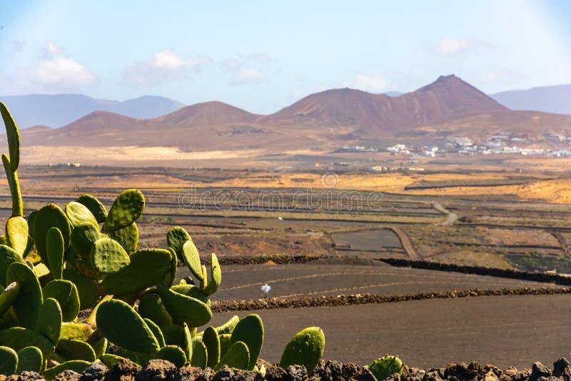Torra vulkaniska ccultivated fält och kaktusLanzarote ö Spanien royaltyfri bild