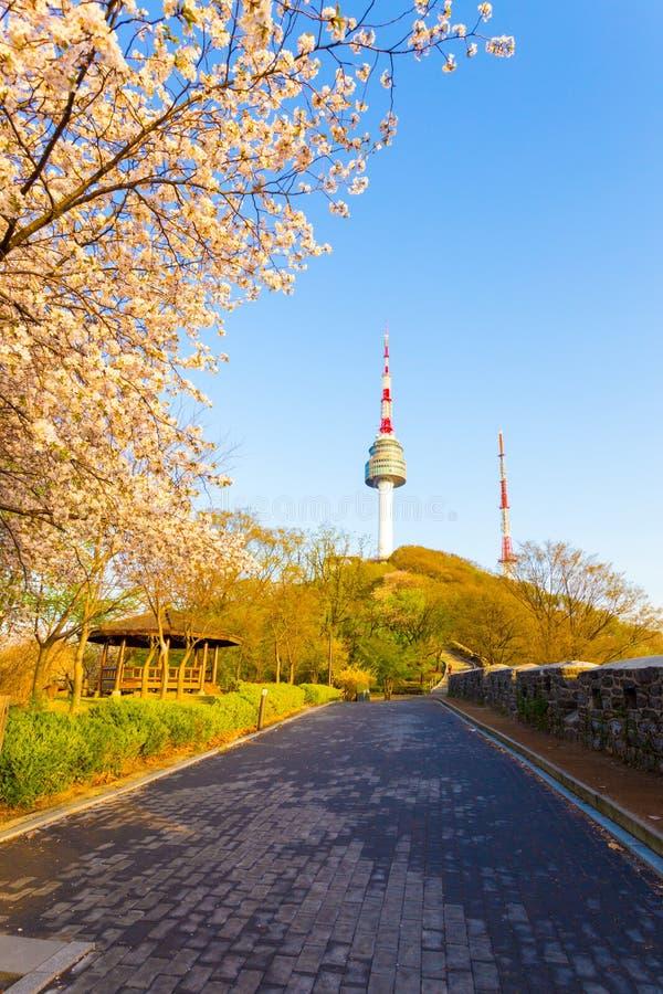 Torre Cherry Blossom Mountain Path Seoul de Namsan fotos de archivo