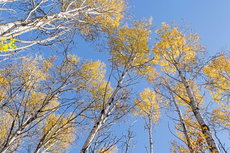Torre das árvores aérea, coroado em amarelo e em alaranjado fotografia de stock royalty free