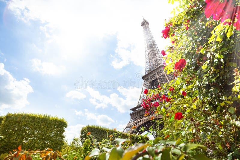 Torre de Eifel através das rosas vermelhas Paris, França foto de stock