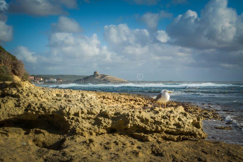 Sardinia stock photos