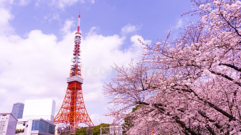 Torre do Tóquio com primeiro plano de sakura no tempo de mola no Tóquio fotografia de stock royalty free