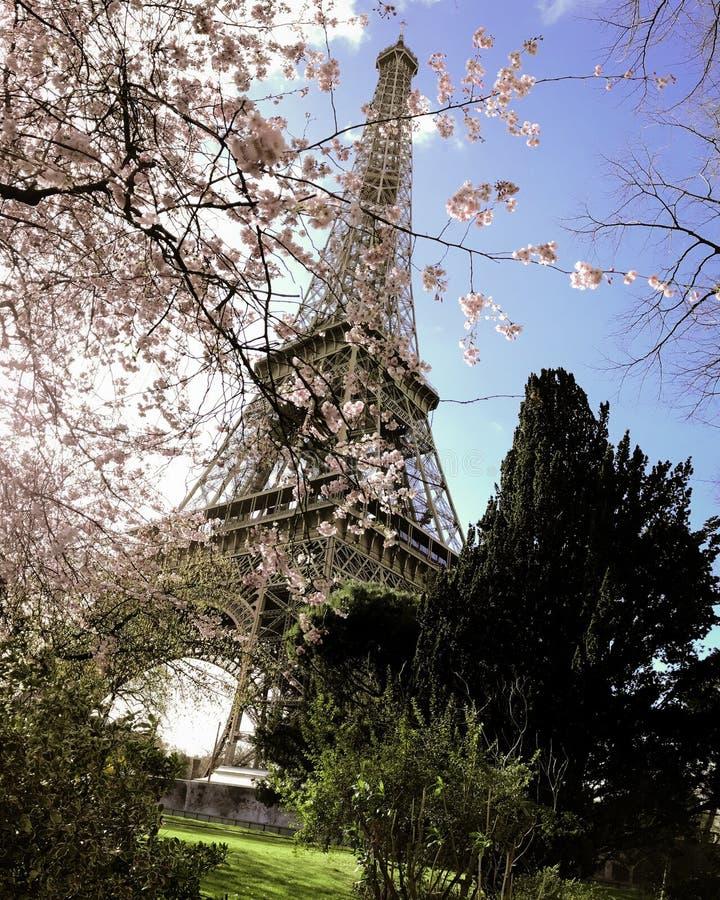 Torre Eiffel Cherry Blossom fotografie stock