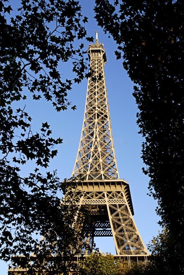 Torre Eiffel de Paris fotografia de stock royalty free
