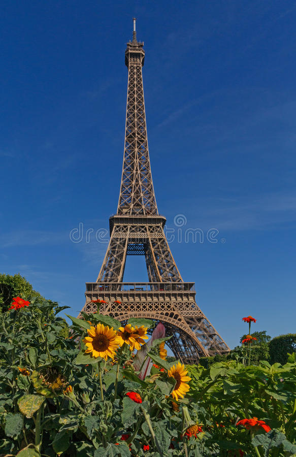 Torre Eiffel dietro i fiori immagine stock