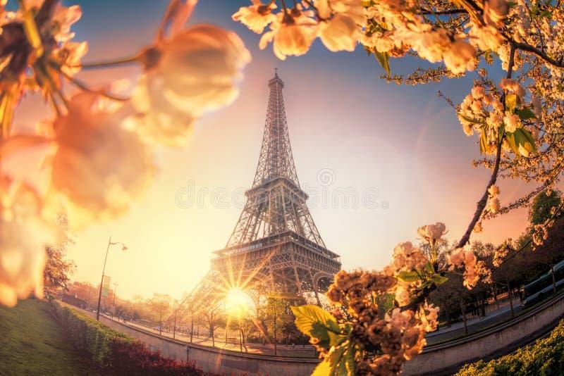 Torre Eiffel durante o tempo de mola em Paris, França imagem de stock royalty free