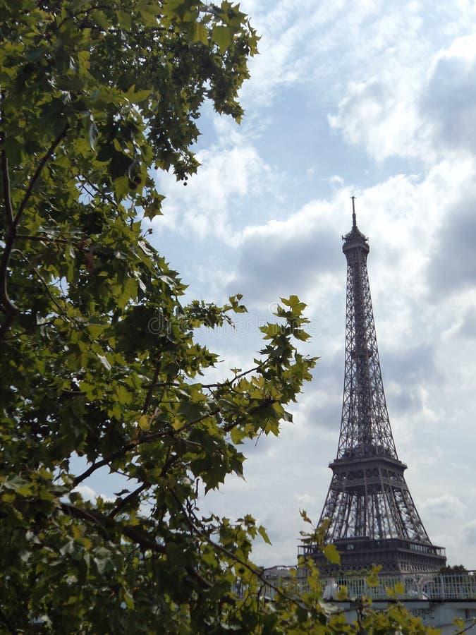 Torre Eiffel e árvores de Paris fotografia de stock