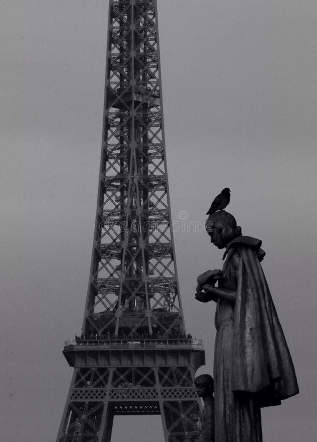 A torre Eiffel e um pombo fotografia de stock royalty free