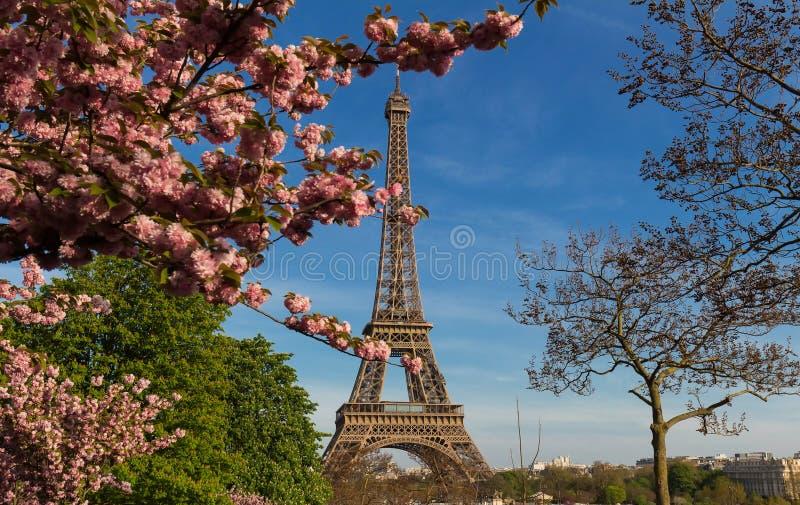 A torre Eiffel icónica em Paris em um dia de mola ensolarado atrás das flores de cerejeira fotos de stock