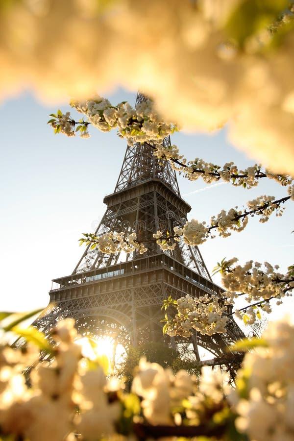 Torre Eiffel no tempo de mola, Paris, France fotos de stock