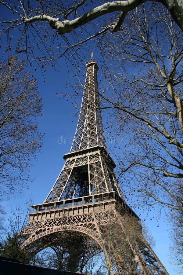 Torre Eiffel, piel por el árbol, en París fotografía de archivo libre de regalías