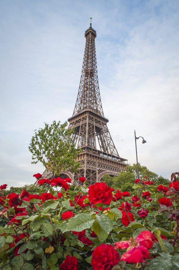 Torre Eiffel e rosas vermelhas imagem de stock