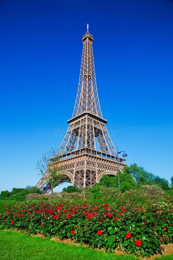 Torre Eiffel, rosas vermelhas em Paris, França imagens de stock
