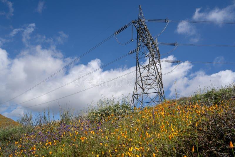 Torre elétrica do pilão contra o céu azul, em um campo das papoilas em Walker Canyon em Califórnia imagem de stock royalty free