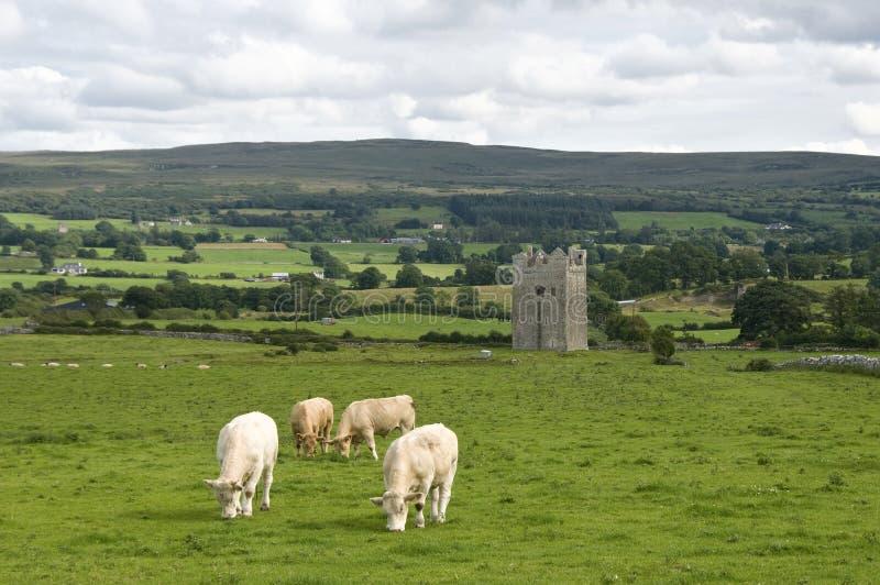 Torre en Irlanda con las vacas foto de archivo