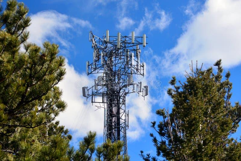 Torre llena apretada de la célula en Sunny Day con los árboles de pino imagen de archivo