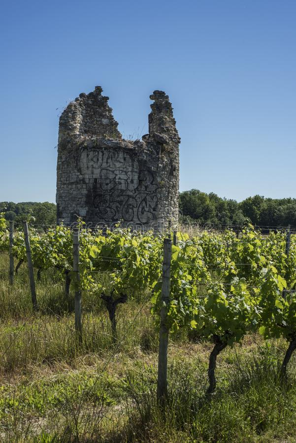 Torre rovinata antica in vigne immagini stock libere da diritti