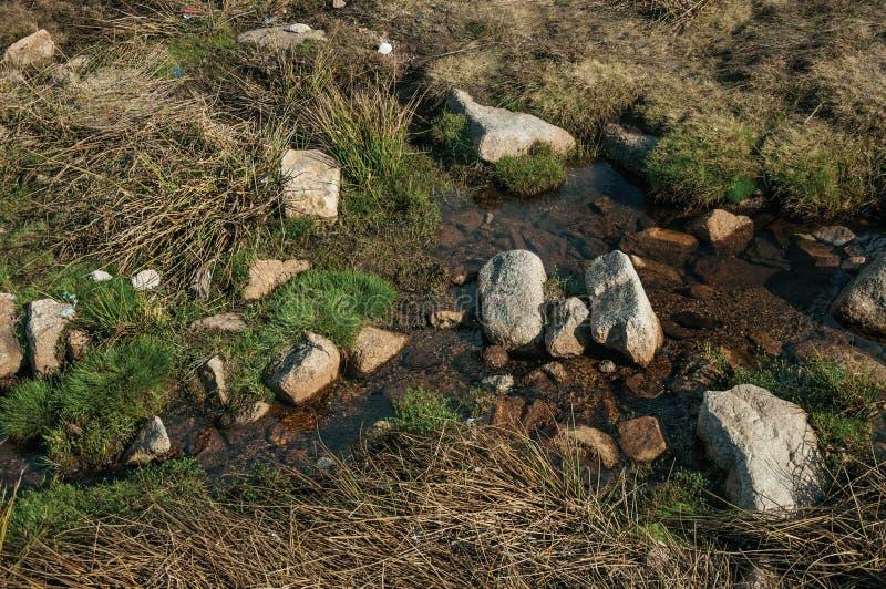 Torrente montano che passa erba e le rocce fotografia stock