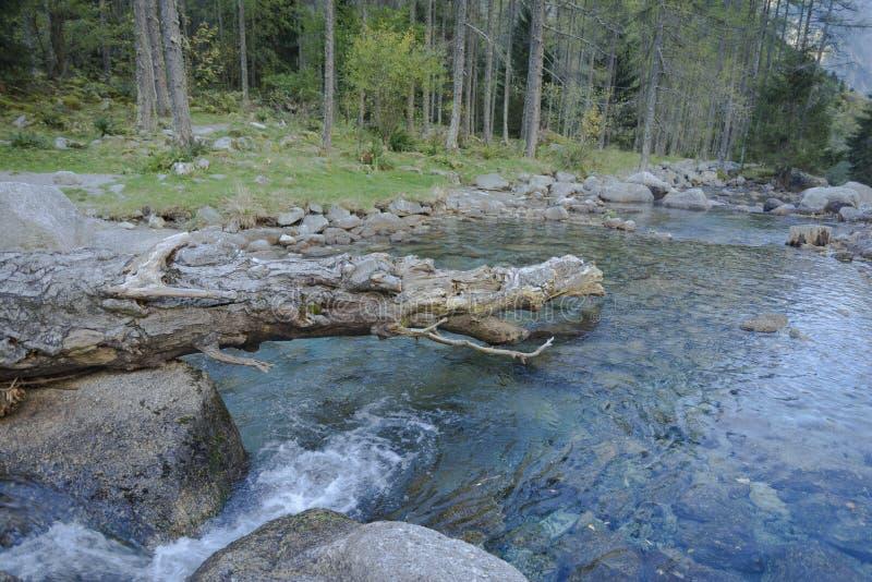 Download Torrente Montano Di Val Masino Fotografia Stock - Immagine di colori, acqua: 102833398