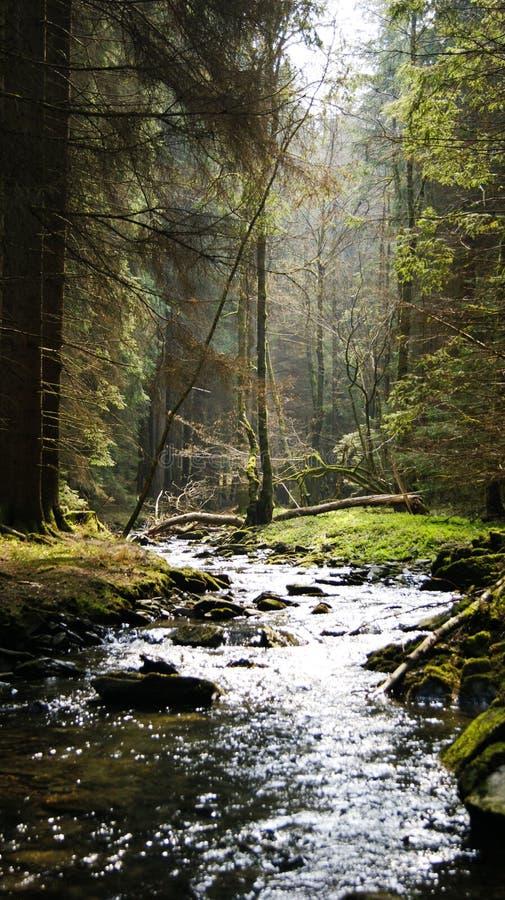 Torrente montano nella foresta leggiadramente fotografia stock