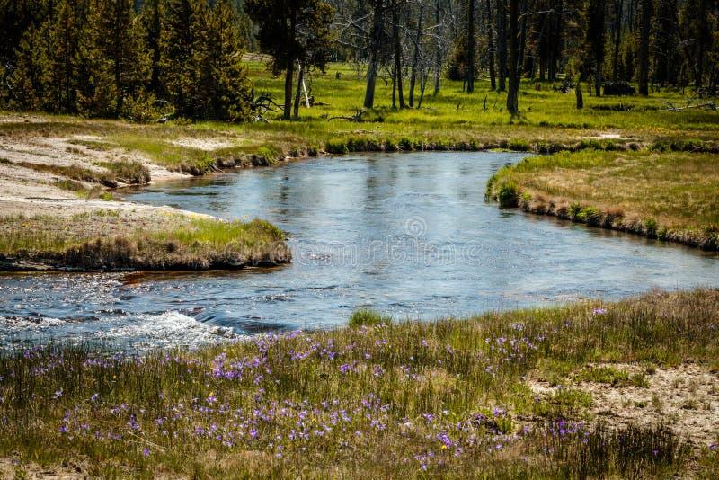 Torrente montano, parco nazionale di Yellowstone immagini stock libere da diritti