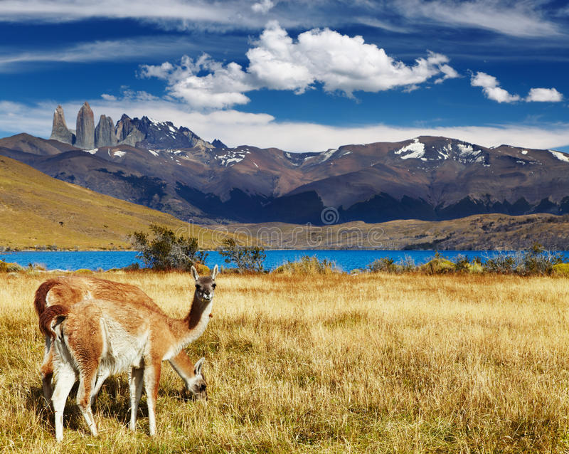 torres de patagonia du Chili del paine photo stock