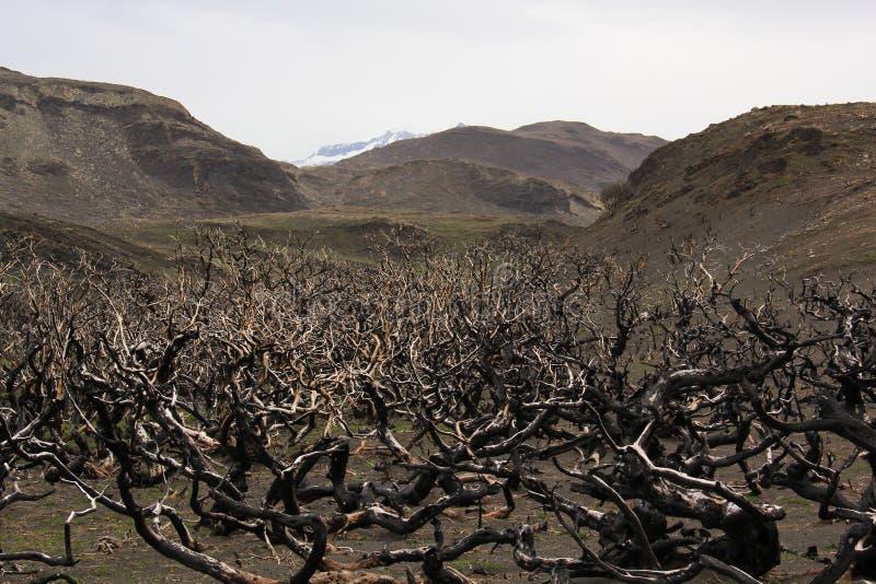 Torres del Paine dopo il fuoco immagini stock