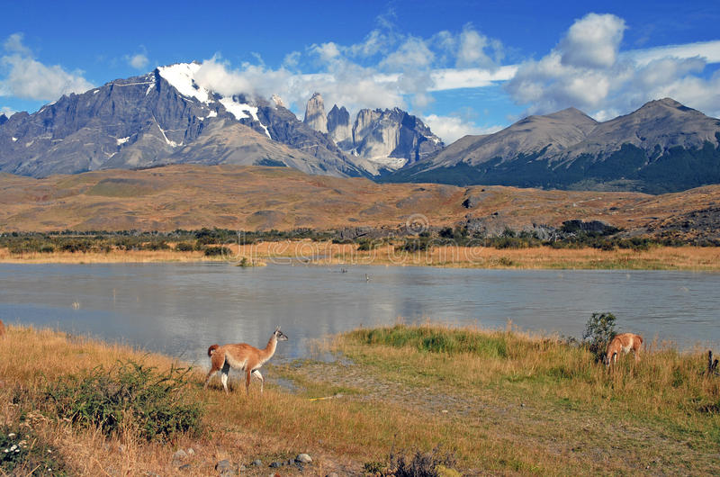 Torres del Paine et Guanaco photo stock