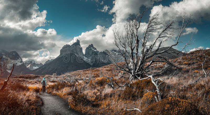 Torres del Paine National Park. Woman hiker walks on the trail among the burnt and dry trees with snow capped mountains on the background. Torred del Paine royalty free stock photo