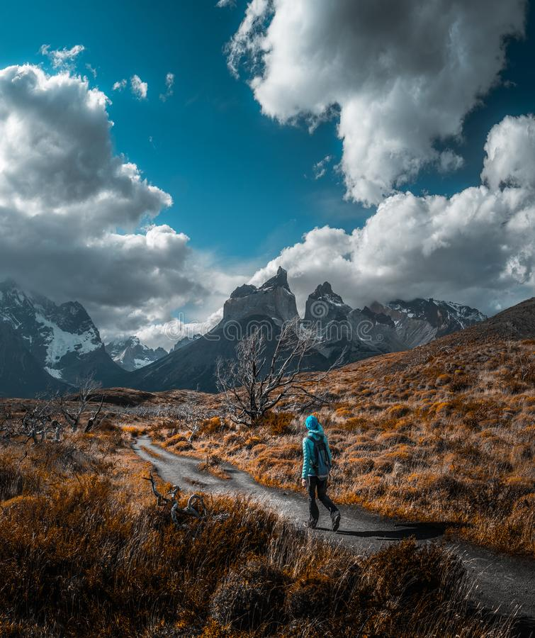Torres del Paine National Park. Woman hiker walks on the trail among the burnt trees and dry grass with snow capped mountains on the background. Torres del Paine royalty free stock image