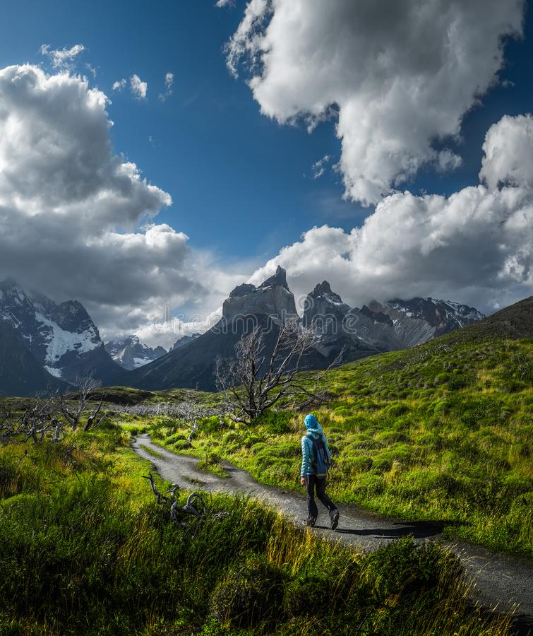 Torres del Paine National Park. Woman hiker walks on the trail among the burnt trees with snow capped mountains on the background. Torres del Paine National Park stock image