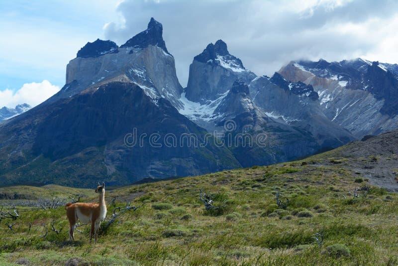 Torres del Paine nationalpark 12 arkivfoton