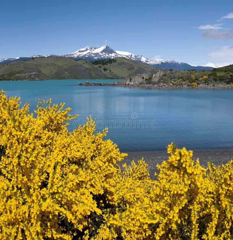 Torres del Paine nationalpark - Chile arkivbild