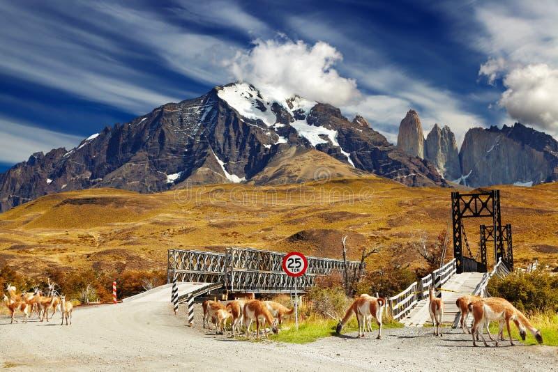 Torres del Paine nationalpark, Chile royaltyfri fotografi