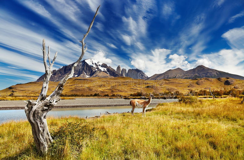Torres del Paine, o Chile imagens de stock