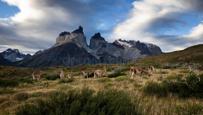 Torres Del Paine foto de archivo libre de regalías