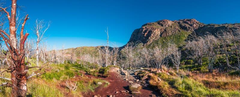 Torres Del Paine park narodowy w jesieni, Patagonia, Chile obrazy royalty free