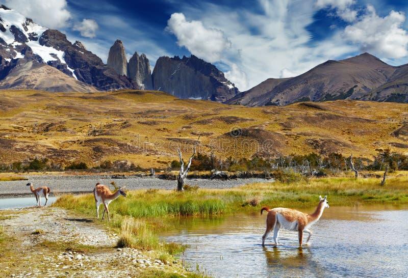 Torres del Paine, Patagonië, Chili royalty-vrije stock afbeelding