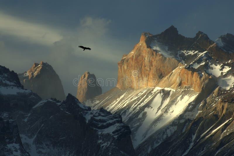 torres du Chili condor del paine photo stock